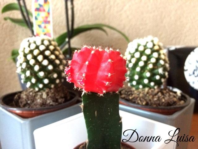 Cactussen in je interieur