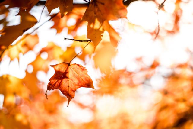 Mentaal voorbereiden op de herfst; hoe doe je dat?